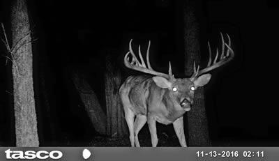 John Walker Drinnon of Whiteboro was named in a recent TPWD report identifying him a one of three men involved in separate deer poaching cases filed in Grayson County by Texas game wardens. The report says Drinnon confessed to killing this big 19 pointer illegally in Dec. 2016. The buck scores 202 B&C and commands civil restitution fees totaling more than $18,000. (TPWD Photos)