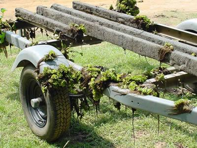 Biologists believe Giant Salvinia may have found its way into Lake Nacogdoches on a boat trailer similar to this one. Anglers and boaters are urged to rid their boats and trailers of potentially noxious plants before trailering down the highway. (TPWD Photo)