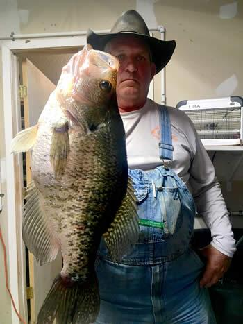 Mega Slab Caught On A Jig Lake Fork Angler Reels In Pending Record 3 55 White Crappie Shelby County Today