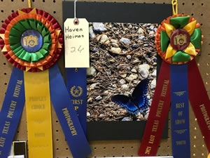 Youth Division - Best of Show and People's Choice
